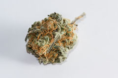 Cannabis Indica Bud (for medicinal purposes) Stock Image
