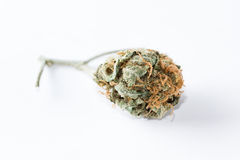 Cannabis Indica Bud (for medicinal purposes) Royalty Free Stock Photo