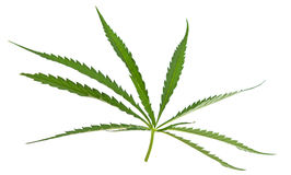 Cannabis isolated Royalty Free Stock Image