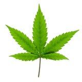 cannabis isolerad leaf Arkivfoton