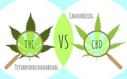 Cannabis lämnar till och med ett förstoringsglas Thc vs cbd stock illustrationer