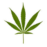 Cannabis leaf Royalty Free Stock Photos