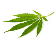 Cannabis leaf Royalty Free Stock Photos