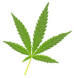 Cannabis leaf Stock Images