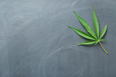 Cannabis leaf. On a chalkboard royalty free stock photo