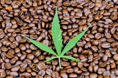 Cannabis leaf on Coffee Royalty Free Stock Photos