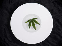 Cannabis leaf floating on a white dish - medical marijuana edible concept royalty free stock images