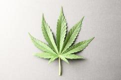 Cannabis Leaf Stock Photography