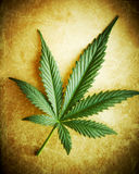 Cannabis leaf on grunge background. Cannabis leaf on grunge background, shallow DOF Royalty Free Stock Photo