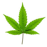 Cannabis leaf isolated Stock Photos