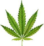 Cannabis leaf isolated on white background Stock Photo
