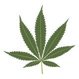 Cannabis leaf isolated on white background. Royalty Free Stock Images