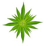 Cannabis leaf, marijuana plant Stock Image