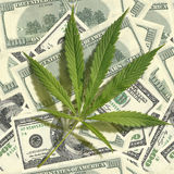 Cannabis leaf on a pile of dollars. Seamless image Royalty Free Stock Image