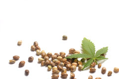 Cannabis Leaf with Seeds Royalty Free Stock Photography