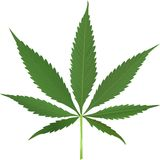 Cannabis leaf vector Stock Photo