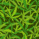 Cannabis leafs seamless pattern. Vector background of narcotic p Royalty Free Stock Photography