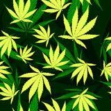 Cannabis leafs seamless vector pattern Royalty Free Stock Photo