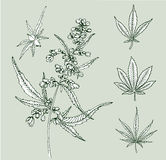 Cannabis leafs vector Royalty Free Stock Images