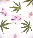 Cannabis leaves and dried pink orquid petals isolated over white royalty free stock image