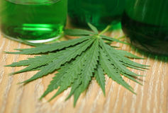Cannabis leaves in laboratory Royalty Free Stock Images