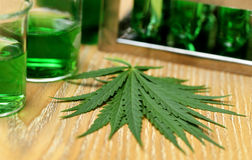 Cannabis leaves in laboratory Stock Image