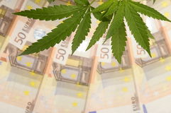 Cannabis leaves and lot of euro mone Royalty Free Stock Image
