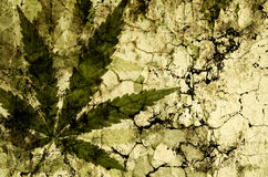 Cannabis leaves over grunge texture Stock Image