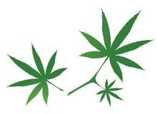Cannabis Leaves Stock Photos