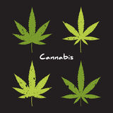 Cannabis logo set. Royalty Free Stock Image
