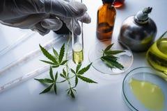 Cannabis marijuana, hampaolja ?r en medicin arkivfoto