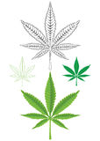 Cannabis Marijuana Leaf Royalty Free Stock Image