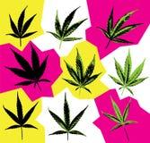 Cannabis marijuana leaf symbol design Stock Images