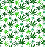 Cannabis marijuana leaf vector seamless pattern Royalty Free Stock Photo