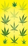 Cannabis marijuana weed green leaf Stock Image