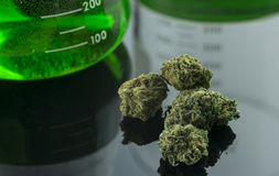 Cannabis medica Fotografia Stock