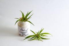 Cannabis medica della marijuana per il trattamento di un medico Fotografie Stock Libere da Diritti