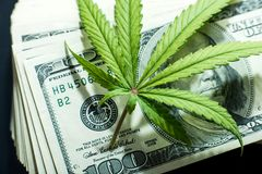 Money and marijuana. Cannabis with money stock photo high quality Royalty Free Stock Photo