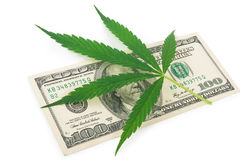 The cannabis and money. On white background royalty free stock photography