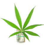 The cannabis and money. On white background stock photography