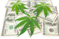 The cannabis and money. On white background Stock Image