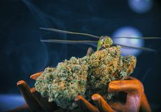 Cannabis nugs and dragonfly isolated over black with smoke and b Stock Images