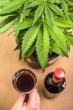 Cannabis och alkohol Royaltyfri Foto
