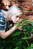 Cannabis odorante della bella ragazza nel pomeriggio Immagini Stock Libere da Diritti