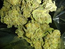 Cannabis ogräs, ört, ganja, moln 9, marijuanacigarett, marijuana, 4/20 Arkivbilder