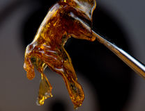 Cannabis oil concentrate aka shatter held on a dabbing tool. Melted cannabis oil concentrate aka shatter held on a dabbing tool over dark background Stock Photos