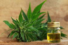 Medical cannabis oil extract and hemp plant. Cannabis oil extract and hemp medical plant royalty free stock photography