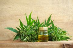 Medical cannabis oil extract and hemp plant. Cannabis oil extract and hemp medical plant stock image