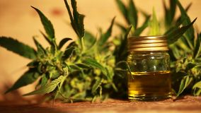 Medical cannabis oil extract and hemp plant