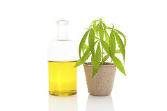 Cannabis oil. Cannabis oil and young cannabis plant on white background Royalty Free Stock Photography